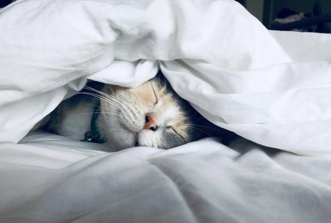 dierenverzekering kat