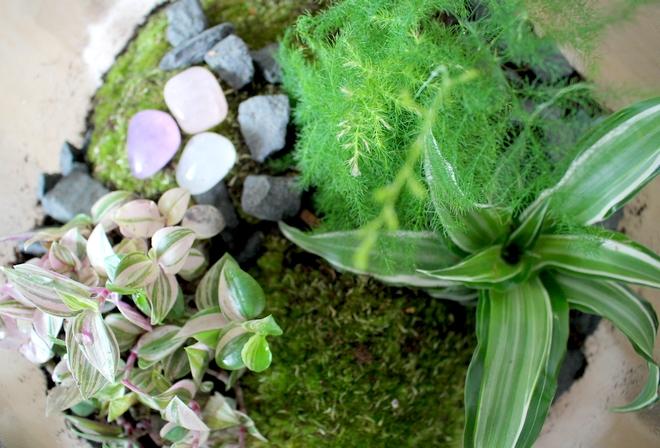 Plant Rebelz terrarium