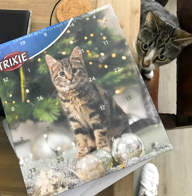trixie adventkalender